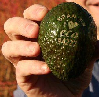 Laser printed avocados